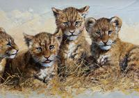 Exceptional 'pride Of Lion Cubs' Large Wildlife Oil Painting By 'silvia Duran' (3 of 12)