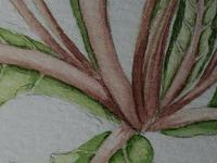 Watercolour Plant Study Botanical Polyanthus after Charles Darwin (7 of 12)