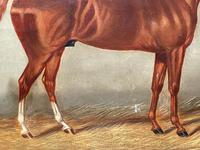 Victorian Oil Painting Chestnut Horse Portrait In Stable Signed Edwin Loder (11 of 42)
