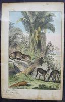 6 Framed Animal Coloured Pictures Plates C1877 Sketches from Nature - India (2 of 14)