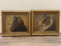 Pair of Scottish 19th Century Oil Paintings Rough Collie Dog Portraits After George Washington Brownlow (2 of 49)