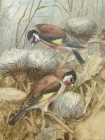 Ornithological Watercolour Finches Birds Study by Florence Barlow Royal Doulton (29 of 40)