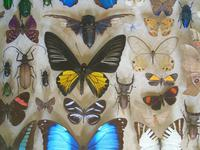 Antique Specimen Butterfly & Insect Case (7 of 8)