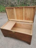 Large Camphor Wood Trunk (5 of 13)