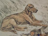 Hunting Dogs Field Spaniels G Vernon Stokes Signed Limited Edition (3 of 6)