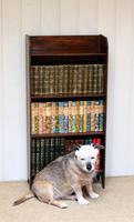 Oak Open Bookcase c.1920 (8 of 8)