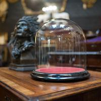 Antique Taxidermy Display Dome, Glass, Showcase, Davis & Co, Bristol, Victorian (4 of 9)