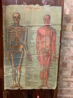 1910 Anatomical Medical Figure (9 of 9)