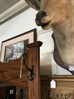 Oak Arts & Crafts / Art Nouveau Hall Stand (7 of 18)