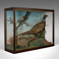Antique Taxidermy Scene, Birds, Pheasant, Blackbird, Display Case, Victorian