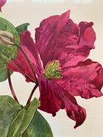 Sublime Claret Clematis Chromolithograph. Henry G Moon. 1903 (4 of 4)