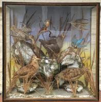 Taxidermy Edwardian Case of 7 Birds Inc: Kingfisher, Snipe, Moorhen & Woodcock (11 of 15)