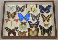 Antique Specimen Butterfly Case (4 of 6)