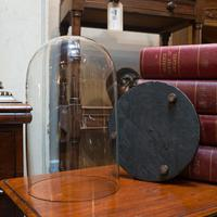 Antique Taxidermy Showcase, English, Glass, Leather, Display Dome, 19th Century (7 of 9)