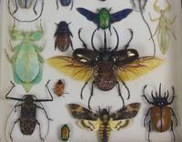 Fabulous Antique Collection Cased Butterfly & Insect Specimens (4 of 8)