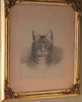 Superb Victorian 'grumpy Cat' Pastel Drawing (6 of 10)