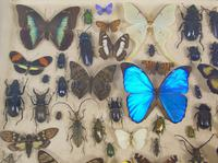 Good Antique Butterfly & Insect Specimens Collection (7 of 7)