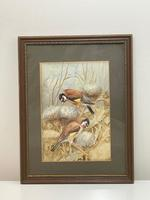 Ornithological Watercolour Finches Birds Study by Florence Barlow Royal Doulton (2 of 40)