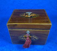 18th Century Mahogany  Shell Inlaid Tea Caddy (10 of 18)