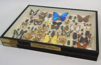 Antique Butterfly and Insect Specimens Collection (3 of 8)
