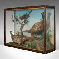 Antique Taxidermy Scene, Birds, Pheasant, Blackbird, Display Case, Victorian (4 of 10)