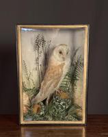 Decorative Cased Taxidermy Barn Owl (3 of 10)