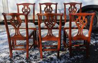 1960 Set 6 Mahogany Georgian style Dining Chairs in a Pale Pattern. (3 of 3)