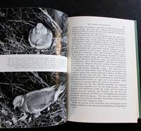 1965 1st Edition New Naturalist No 20 The Wood Pigeon by R K Murton with Original Dust Jacket (3 of 5)