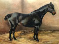Oil Painting Portrait Study Black Horse in Stable Signed Alice Mary Burton RBA '1893-1968' (6 of 26)