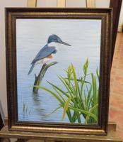 Oil on Canvas Study of a Kingfisher Listed Artist Geoffrey Campbell Black (7 of 10)