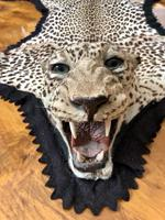 Antique Leopard Skin Rug Taxidermy by Peter Spicer (4 of 18)