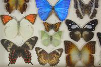 Antique Specimen Butterfly Case (2 of 6)