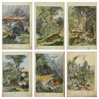 6 Framed Animal Coloured Pictures Plates C1877 Sketches from Nature - N America & Canada (9 of 12)
