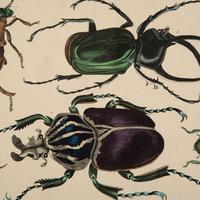 Hand Coloured 'Beasties 2' Lithograph. Goldsmith 1875