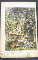 6 Framed Animal Coloured Pictures Plates C1877 Sketches from Nature - N America & Canada (8 of 12)