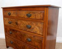 Chest of Drawers Burl Walnut Victorian (6 of 11)