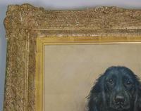 Marion Harvey 1886-1971 Portrait of a Black Spaniel (3 of 9)