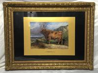 Victorian Scottish Highland Painting of Cattle by Aster Richard Chilton Corbould (31 of 40)