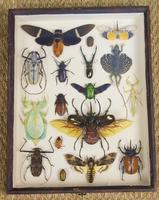 Fabulous Antique Collection Cased Butterfly & Insect Specimens (2 of 8)