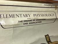 Vintage Medical Anatomical Elementary Physiology Chart Poster Early Arnold No 5 (2 of 19)
