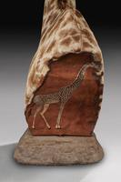 Rare And Extremely Well Prepared Late 20th Century Taxidermy African Bull Giraffe (5 of 14)