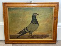 Decorative Sporting Early 20th Century Oil Canvas Painting English Racing Pigeon (3 of 35)
