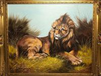 Fine Art Vintage 20th Century Oil Canvas Painting Recumbent Lion Portrait Signed (6 of 12)