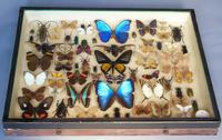 Antique Specimen Butterfly & Insect Case (8 of 8)