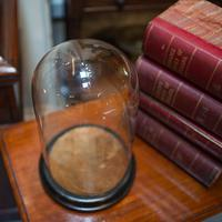 Antique Taxidermy Showcase, English, Glass, Leather, Display Dome, 19th Century (4 of 9)