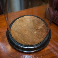 Antique Taxidermy Showcase, English, Glass, Leather, Display Dome, 19th Century (8 of 9)