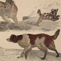 Hand Coloured 'Working Dog' Lithograph. Goldsmith 1875