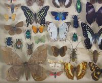 Good Antique Butterfly & Insect Specimens Collection (6 of 7)