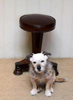 William IV Rosewood Piano Stool (9 of 9)