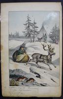 6 Framed Animal Coloured Pictures Plates C1877 Sketches From Nature - N Europe & Lapland (9 of 11)